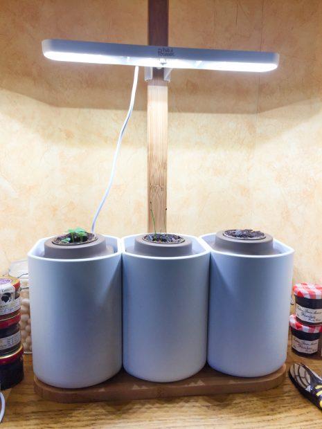 IMG 3579 465x620 - On a testé : Le potager d'intérieur Lilo (Prêt à pousser)