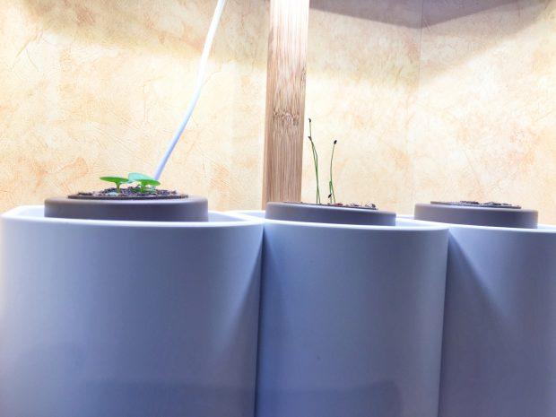 IMG 3580 620x465 - On a testé : Le potager d'intérieur Lilo (Prêt à pousser)