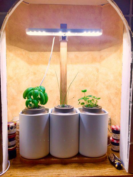IMG 3711 465x620 - On a testé : Le potager d'intérieur Lilo (Prêt à pousser)